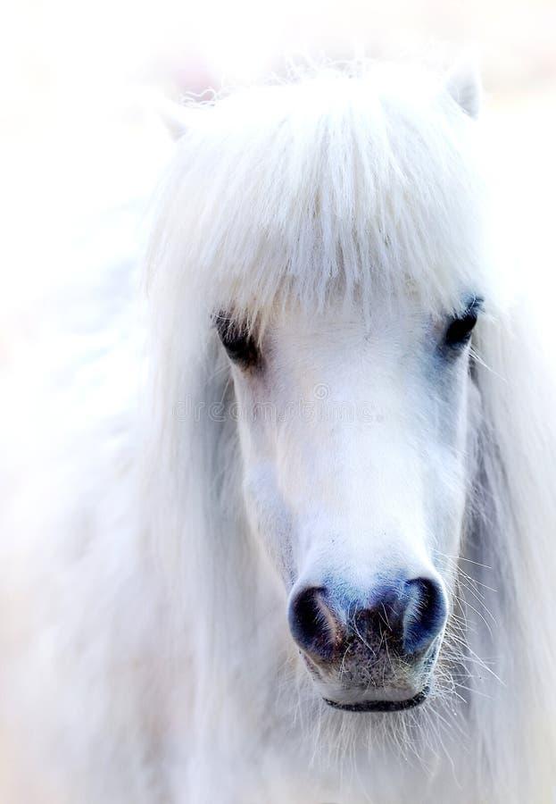 Weißes Pferd lizenzfreie stockfotos