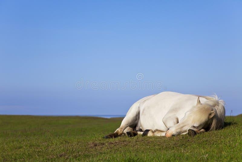 Weißes Pferd, das auf einem Gebiet schläft lizenzfreie stockfotografie