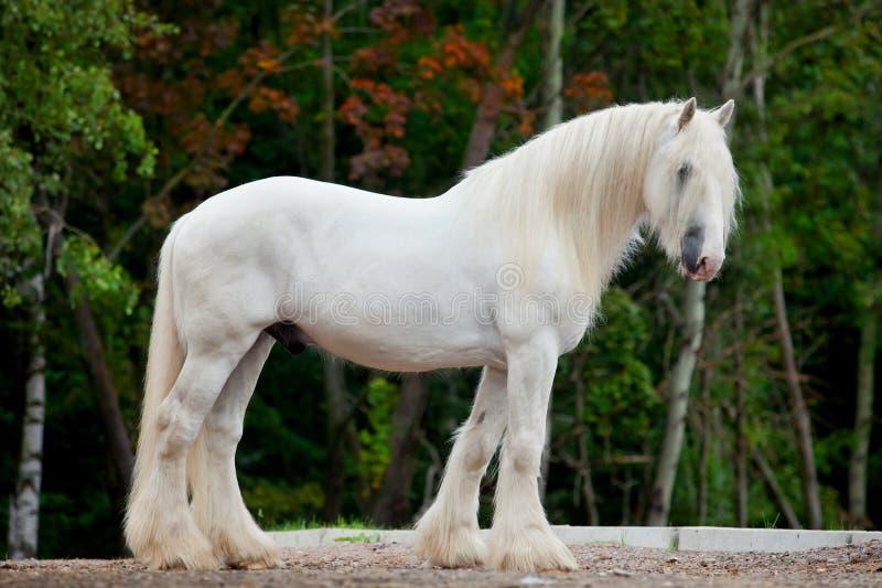 Weißes Pferd im Herbst lizenzfreies stockfoto