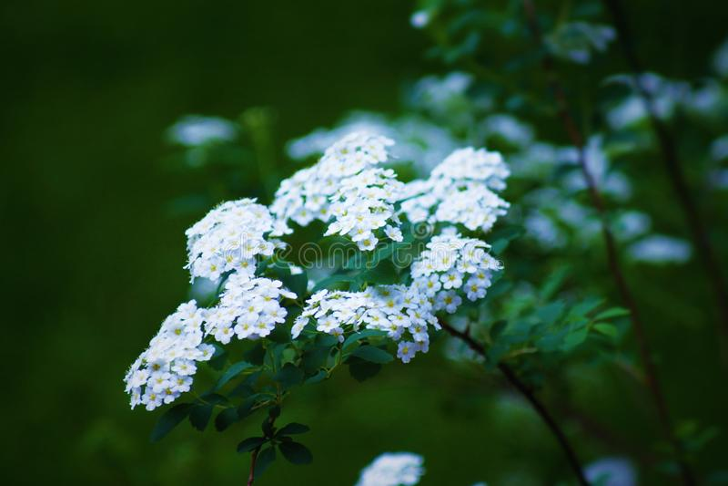 Weißes plante lizenzfreies stockbild