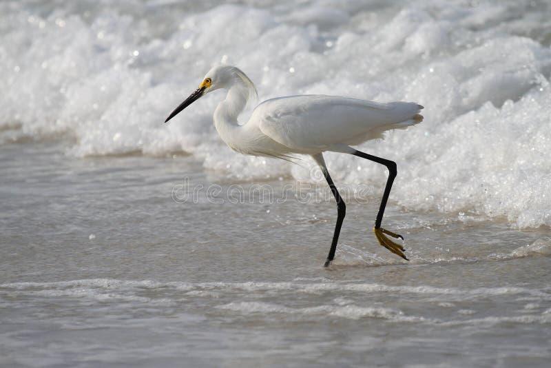 Weißes Reiherfischen in den Wellen lizenzfreie stockbilder
