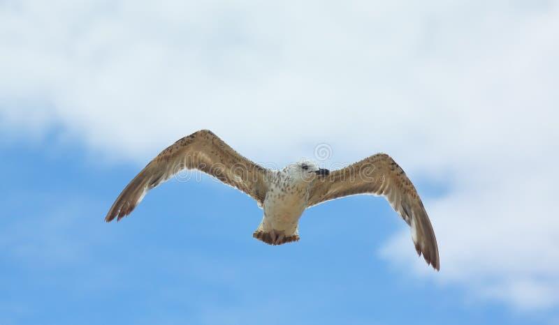 Weißes Seevogel im Himmel stockfotos