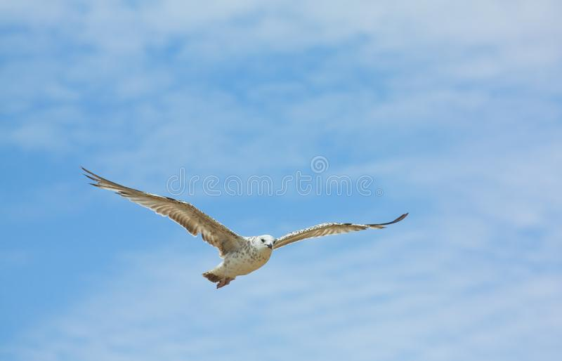 Weißes Seevogel im Himmel lizenzfreies stockbild