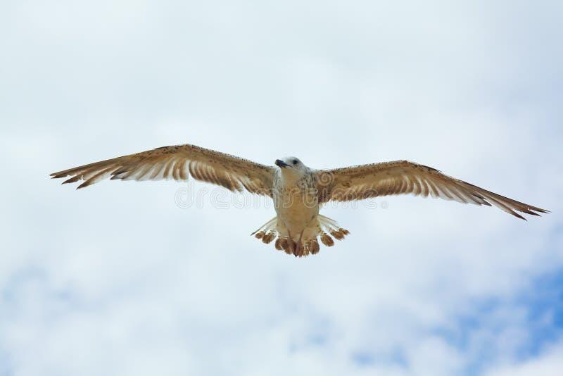 Weißes Seevogel im Himmel stockfotografie