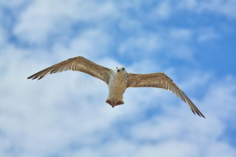 Weißes Seevogel im Himmel lizenzfreie stockfotos