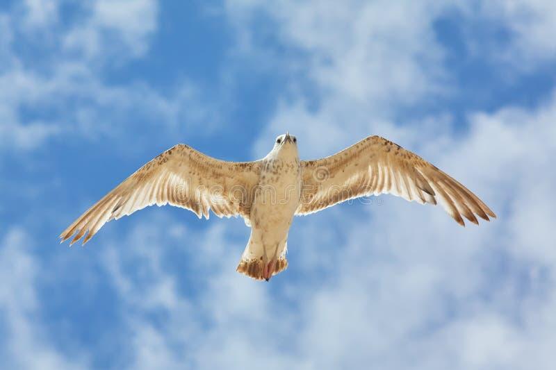 Weißes Seevogel im Himmel lizenzfreies stockfoto