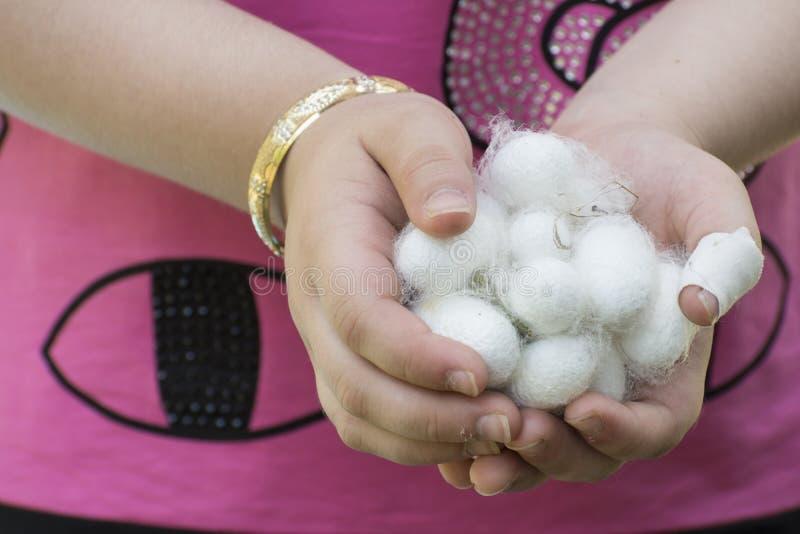 Weißes Seidenraupenkokonoberteil auf hand- Quelle des jungen Mädchens des Seidenfadens und -Seidengewebes stockbild