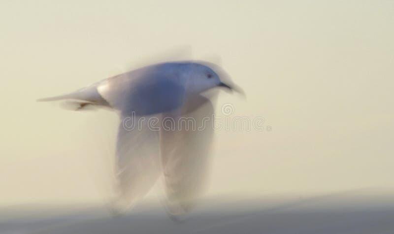Weißes Sevogelflugwesen in einem langsamen Blendenverschlußunschärfenschuß. lizenzfreie stockfotos