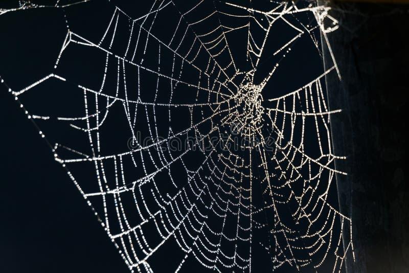 Weißes Spinnennetz stockbild