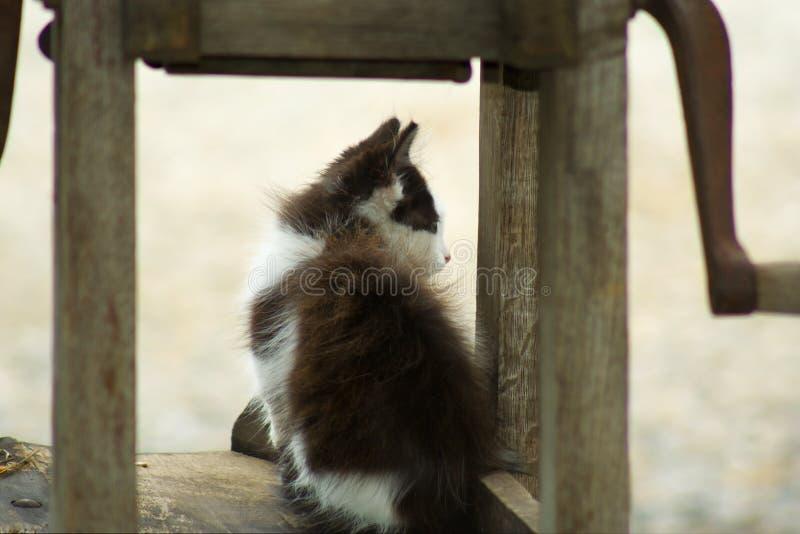 Download Weißes und graues Kätzchen stockfoto. Bild von wirbeltier - 12201506