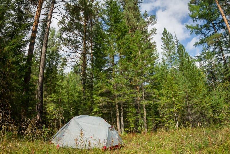 Weißes Zelt in einer Reinigung in einem Wald unter Bäumen lizenzfreies stockbild