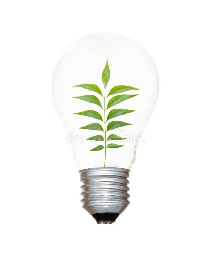 Weißglühende Glühlampe mit einem Baum lizenzfreie stockfotografie