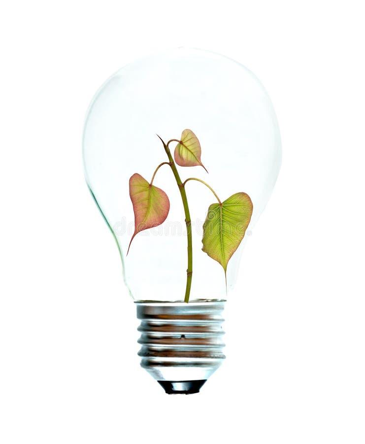 Weißglühende Glühlampe mit einem Baum lizenzfreie stockbilder