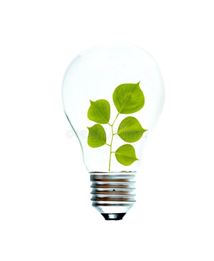 Weißglühende Glühlampe mit einem Baumeintragfaden lizenzfreie stockbilder