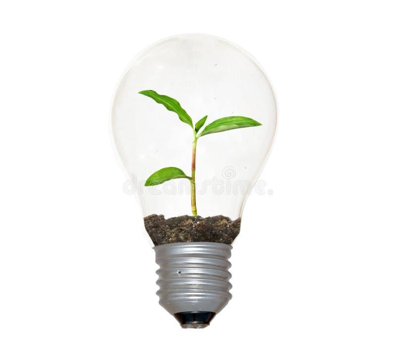 Weißglühende Glühlampe mit planat als Heizfaden lizenzfreie stockfotografie