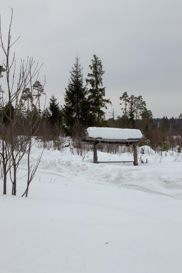 Weißschneebewald in Russland stockbilder