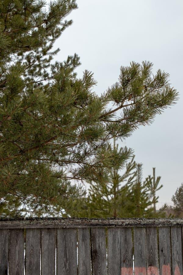 Weißschneebewald in Russland stockbild