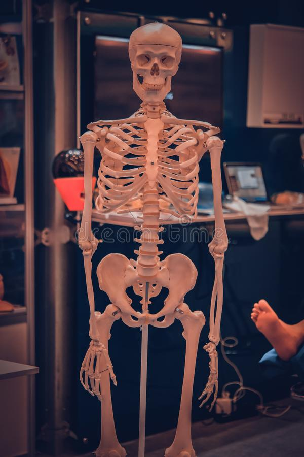 Weiße menschliche skeleton blinde Nahaufnahme, Knochenstruktur lizenzfreie stockbilder