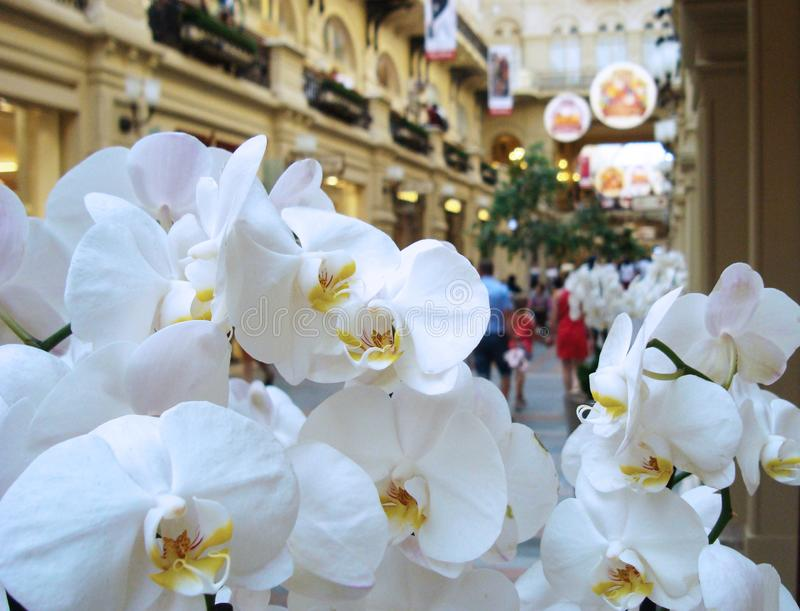 Weiße Orchideenblumen auf dem Hintergrund eines großen Einkaufszentrums stockfoto