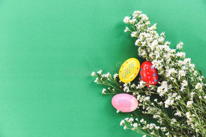 Weiße Schneiderblume der Osterei-Dekoration auf grünem Hintergrund lizenzfreies stockfoto