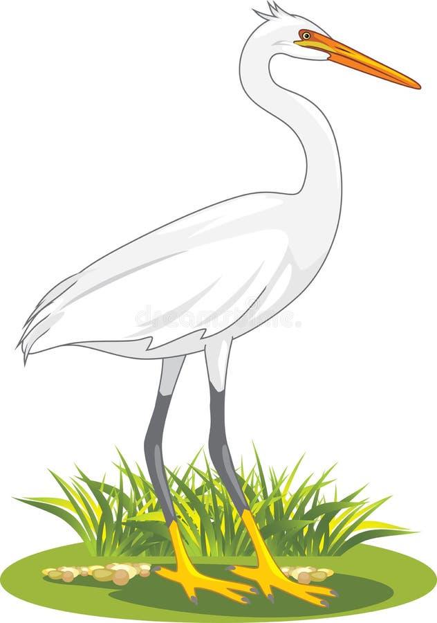 Weißer Reiher auf dem Rasen stock abbildung