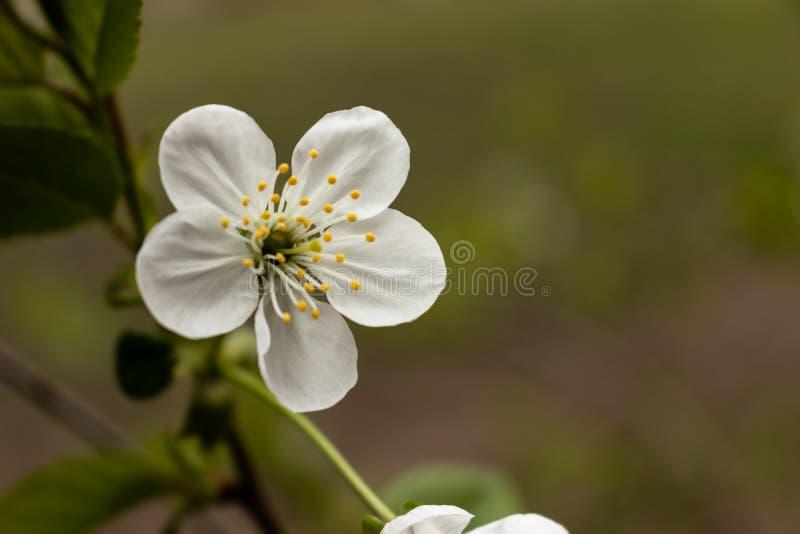 Wei?e Blume auf Niederlassung stockfotos