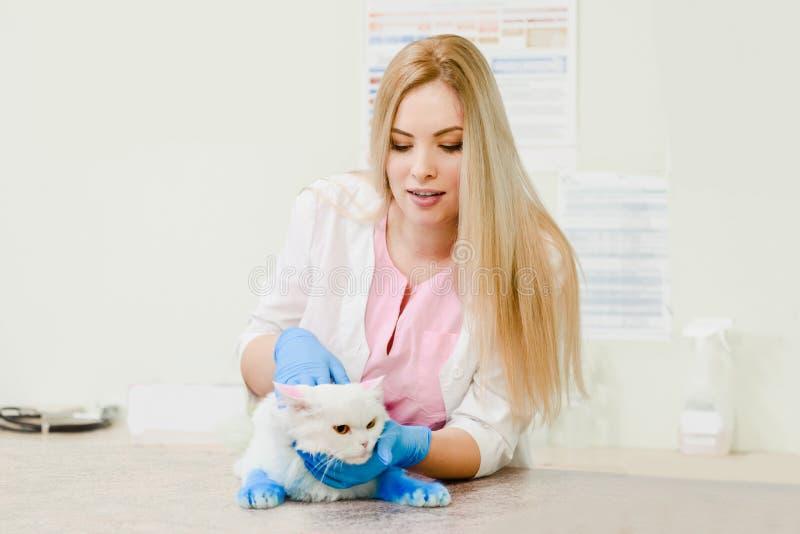 Wei?e Katze im Tierarzt lizenzfreies stockfoto