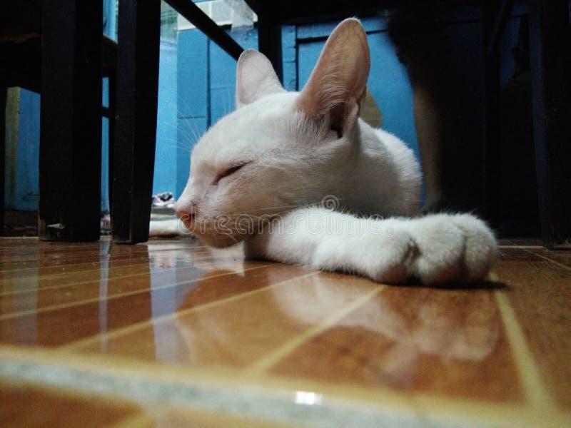 Wei?e Katze lizenzfreie stockfotografie