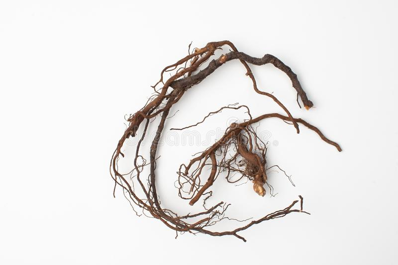 Wei Ling Xian, Clematis Root Chinese Herb. Clematis translates to English as `Temples Holy Root` and also sometimes called `Powerful Soul Root` after an old royalty free stock photos