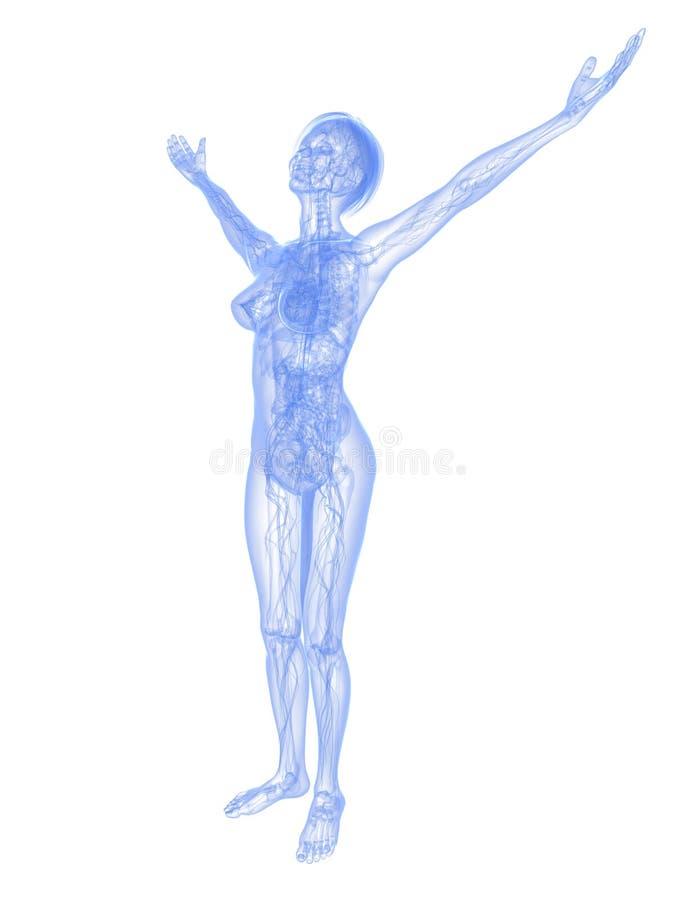 Ziemlich Weibliche Anatomie Arm Fotos - Anatomie Ideen - finotti.info