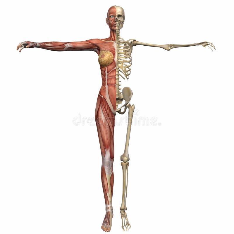 Ziemlich Männlich äußeren Genitalien Anatomie Fotos - Anatomie Ideen ...