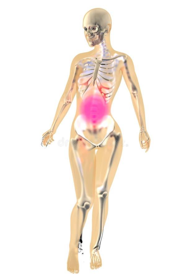 Ziemlich Freie Weibliche Anatomie Fotos Bilder - Anatomie Ideen ...