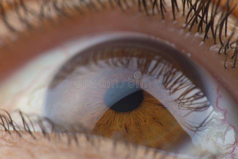 Weibliche Braunnahaufnahme des wachsamen Auges mit den langen Peitschen, die oben schauen lizenzfreie stockfotografie