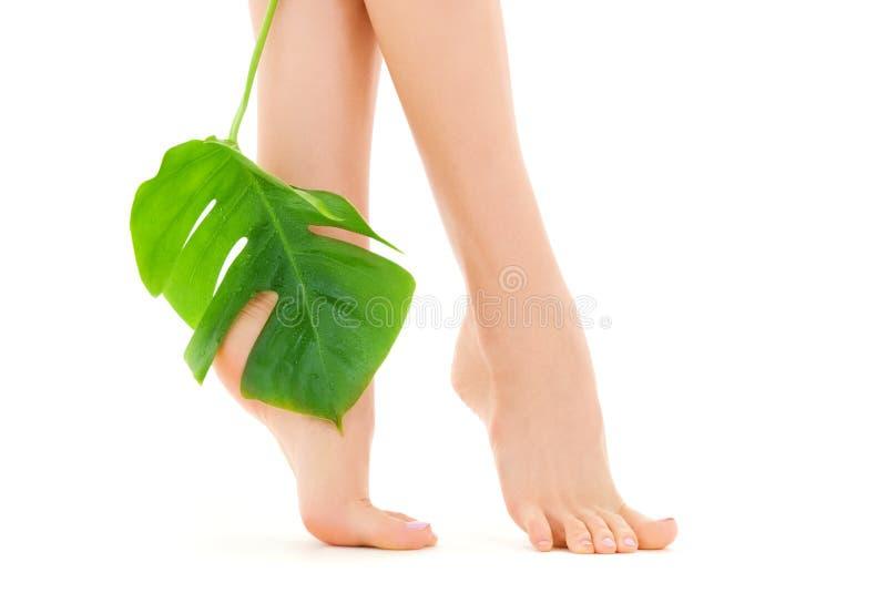 Weibliche Füße mit grünem Blatt stockbilder