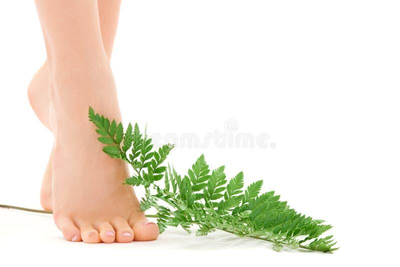 Weibliche Füße mit grünem Blatt stockfotografie