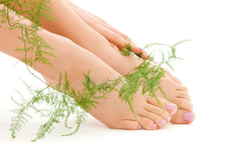 Weibliche Füße mit Grünpflanze stockfotos