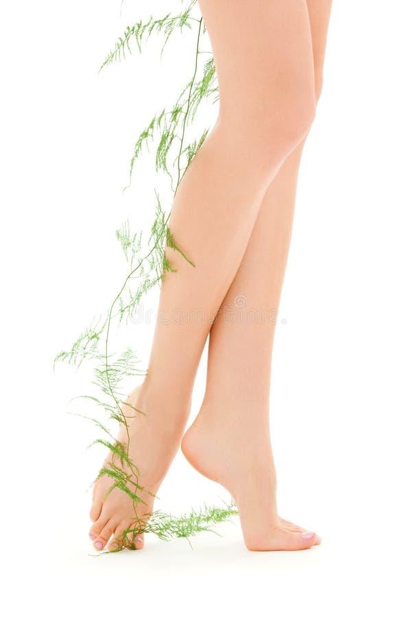 Weibliche Fahrwerkbeine mit Grünpflanze lizenzfreies stockbild