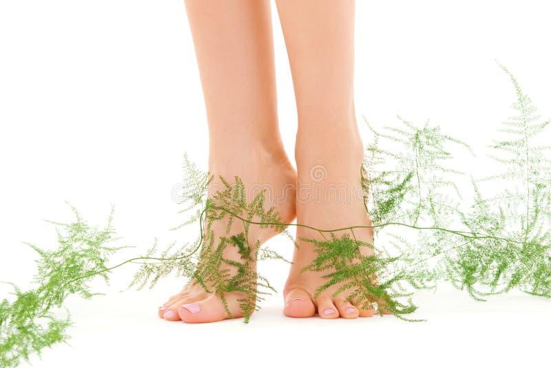 Weibliche Fahrwerkbeine mit Grünpflanze lizenzfreies stockfoto