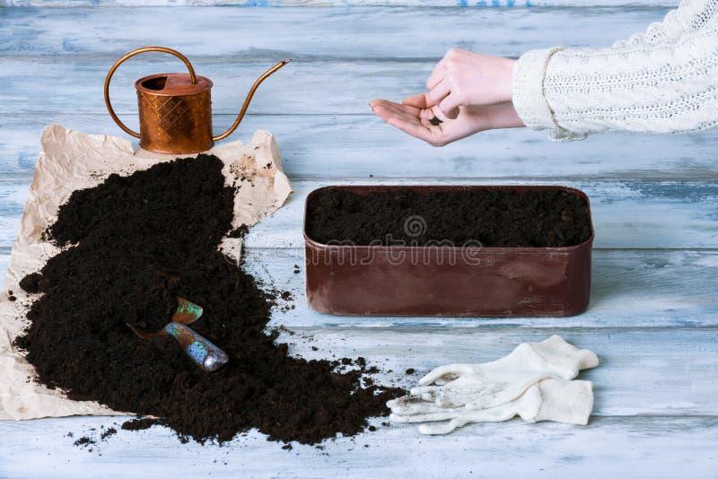 Weibliche Gärtnersäenkräuter lizenzfreies stockbild