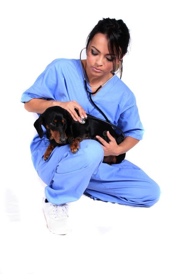 Weibliche Gesundheitspflege-Arbeitskraft mit Hund stockfoto