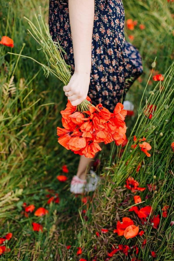 Weibliche Hände, die einen Blumenstrauß der roten Mohnblume halten stockfotografie