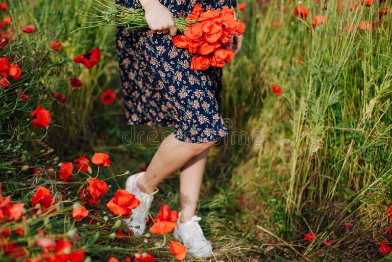 Weibliche Hände, die einen Blumenstrauß der roten Mohnblume halten stockbilder