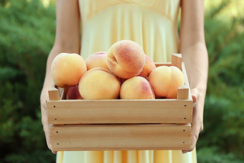 Weibliche Hände, die Holzkiste mit reifen Pfirsichen halten lizenzfreies stockfoto