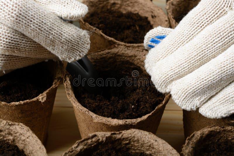 Weibliche Hände, die Samen in einem Torftopf pflanzen stockbilder