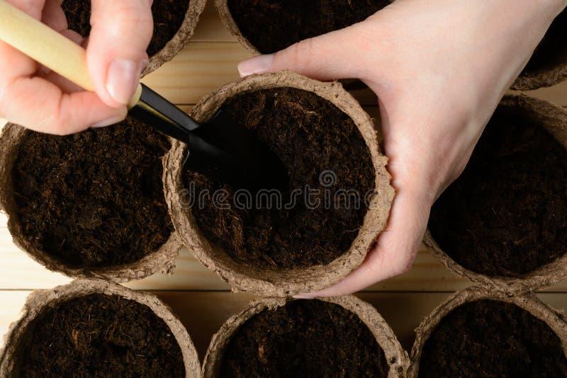 Weibliche Hände, die Samen in einem Torftopf pflanzen stockfotos