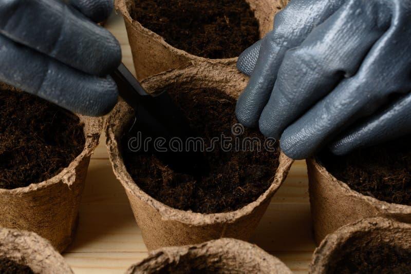 Weibliche Hände, die Samen in einem Torftopf pflanzen lizenzfreies stockfoto