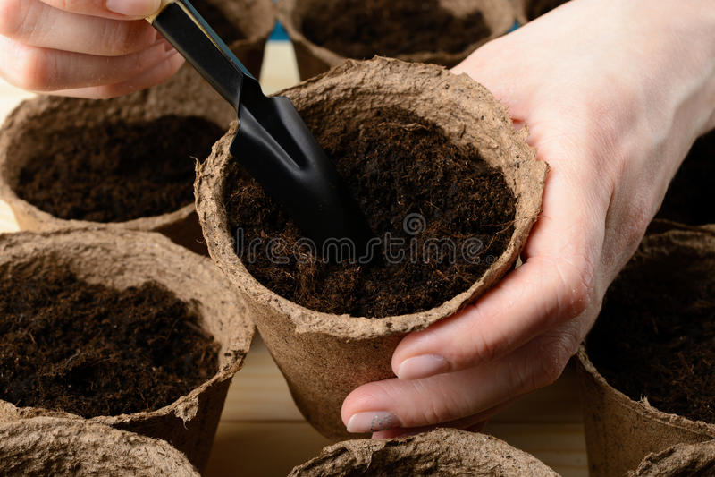 Weibliche Hände, die Samen in einem Torftopf pflanzen lizenzfreie stockbilder