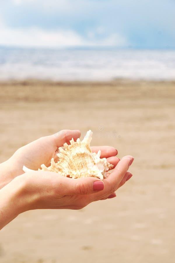 Weibliche Hände halten einen schönen Cockleshell in den Palmen vor dem hintergrund des sandigen Strandes und des Wassers von stockfotos