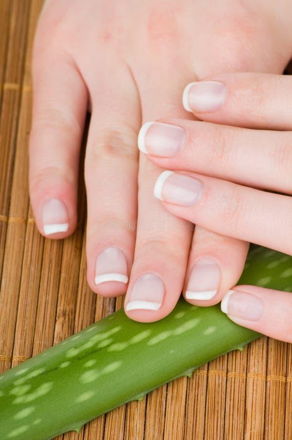 Weibliche Hände mit Aloeblatt stockbilder