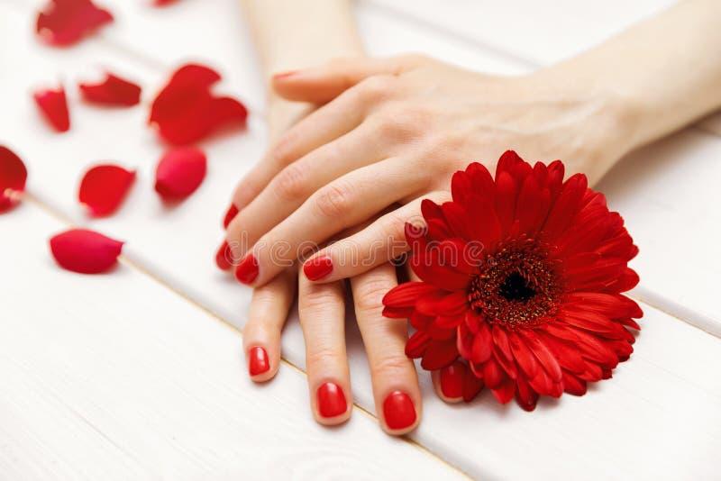 weibliche Hände mit den tadellos manikürten roten Fingernägeln lizenzfreie stockbilder